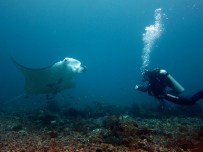 Scuba diving with manta rays Komodo Indonesia