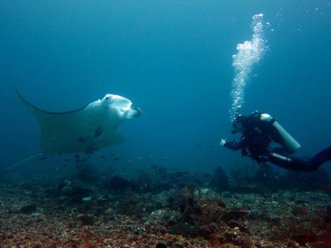 Scuba diving with manta rays Komodo Indonesia
