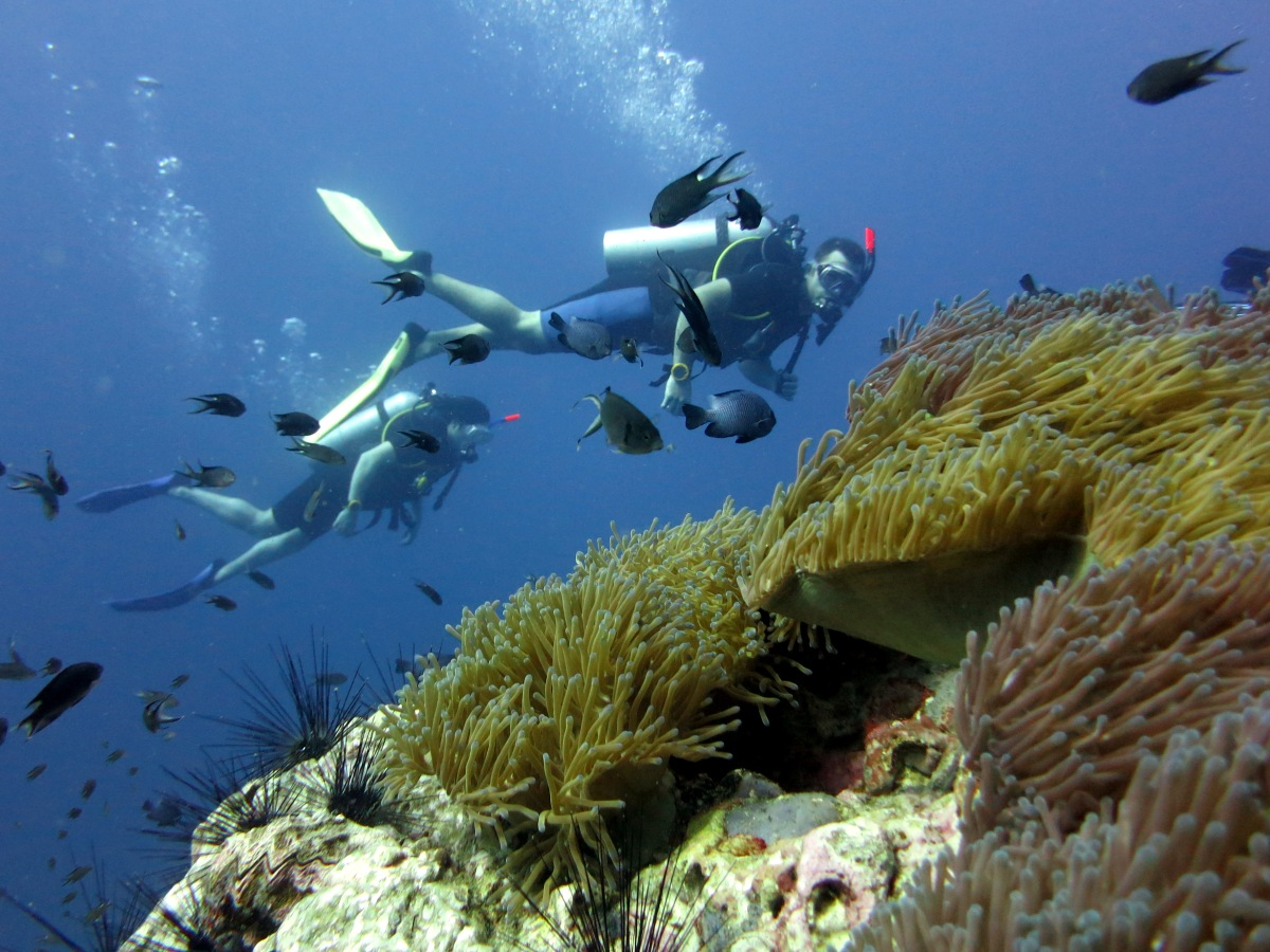 Scuba divers Koh Tao Thailand South West Pinnacle
