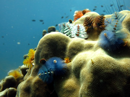 christmas trees scuba diving Koh Tao Thailand