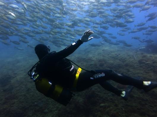 Scuba diver school fish Marseille France
