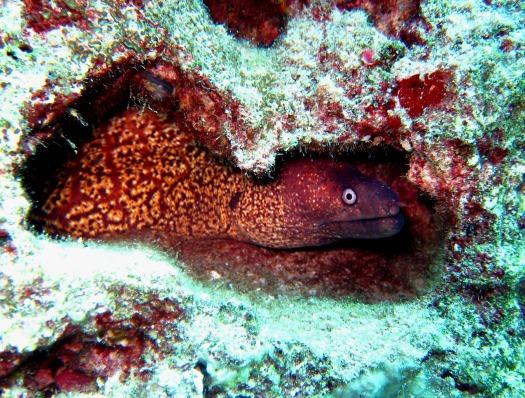 morray eel Kas Turkey
