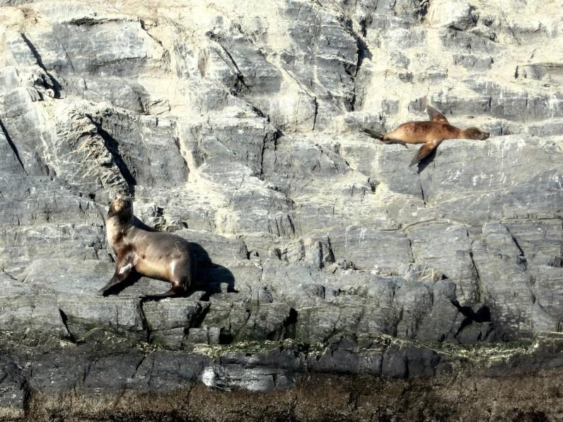 sea lions ushuaia canal beagle