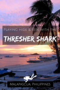 Playing hide seek with the thresher shark in malapascua Philippines