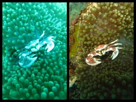 Same picture same moment auto vs manual mode underwater picture