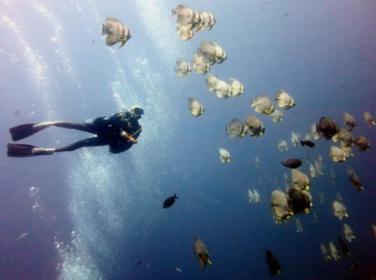 Scuba diver School Batfish scuba diving Sail Rock Koh Tao Thailand