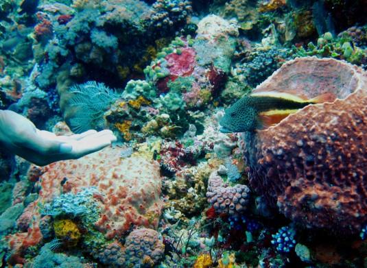 Fish tamer scuba diving Komodo Indonesia