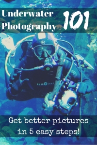 Underwater Photography 101 Get better pictures in 5 easy steps