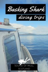 Basking shark diving trip Sound of Mull Scotland