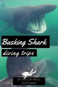Basking shark diving trip Scotland