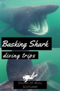 Basking shark diving trip Scotland