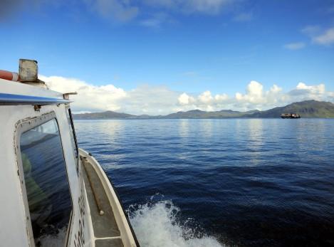 Basking shark boat trip scuba diving Sound of Mull Scotland