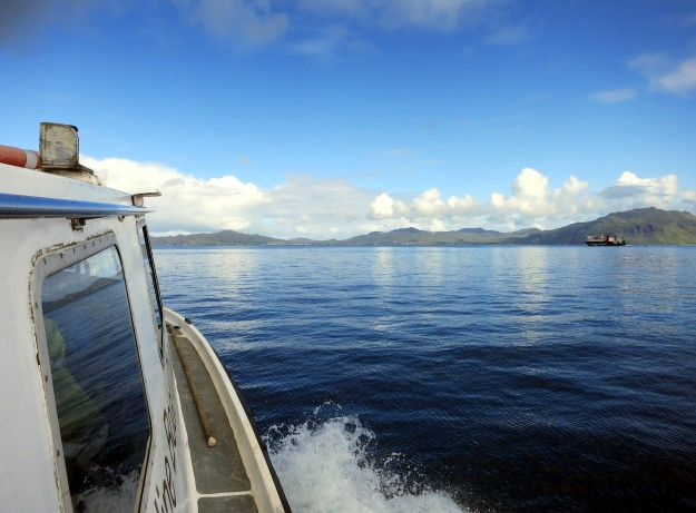 Basking shark boat trip scuba diving Sound of Mull Scotland