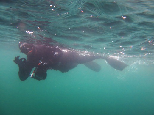 Basking shark trip Sound of Mull Scotland