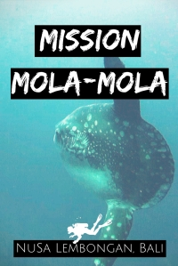 Mission Mola-Mola Scuba diving with Sunfish Nusa Lembongan Bali