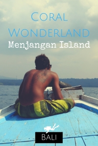 Coral Wonderland Scuba diving in Menjangan Island Bali Indonesia