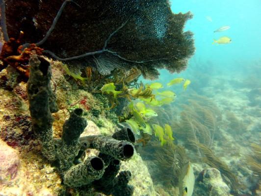 Scuba diving Key West Florida USA
