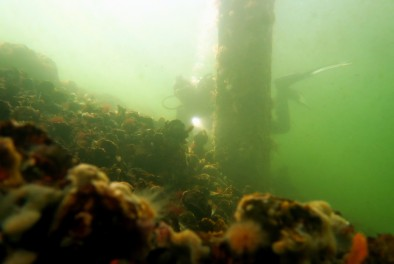 Scuba diving in Dreischor Zeeland Netherlands