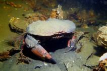 Scuba diving in Den Osse Zeeland Netherlands