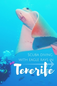 Scuba diving with eagle rays in Tenerife