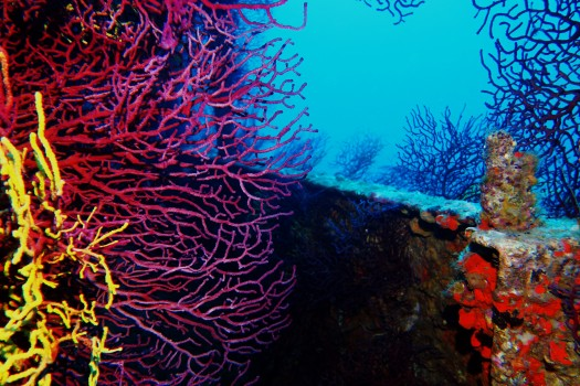 Donator wreck scuba diving porquerolles France
