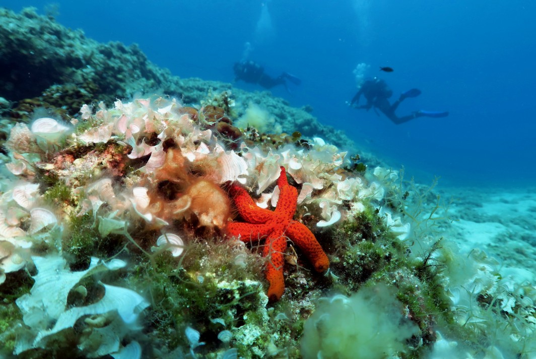 Scuba diving at Agios Petros Reef Alonissos Greece