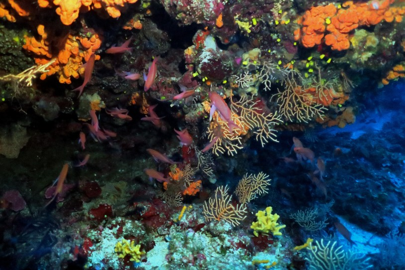 Scuba diving at the Gorgonian Gardens Alonissos Greece