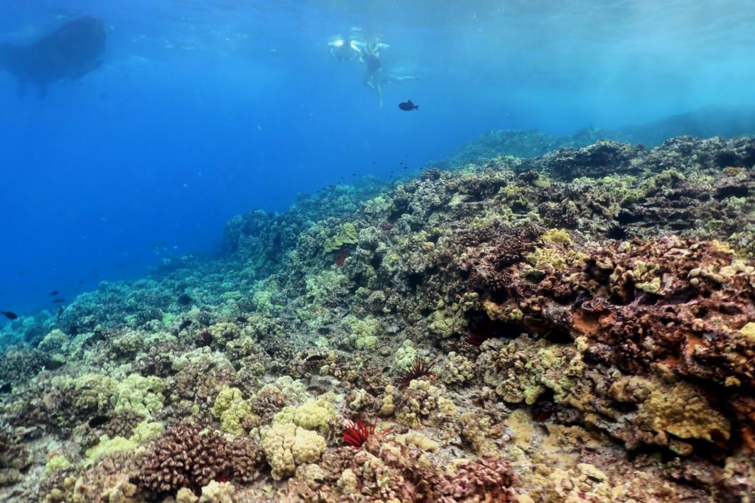Snorkelling Enunue Molokini Crater Maui Hawaii USA