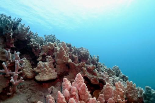 Ulua Beach scuba diving shore diving Wailea Maui Hawaii