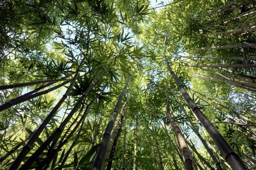 Bamboo Forest Road to Hana Maui Hawaii
